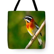 Western Spindalis Tote Bag by Tony Beck