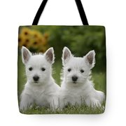 Westie Puppies Tote Bag