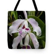 Wet Faces Tote Bag