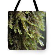 Wet Redwood Branches Tote Bag