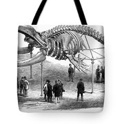 Whale Skeleton, 1866 Tote Bag