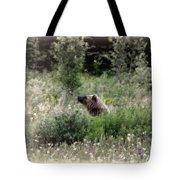 When Bears Dream Tote Bag