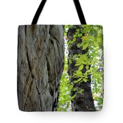Where The Tree Meets The Stone Tote Bag