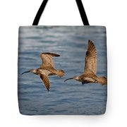 Whimbrels Flying Close Tote Bag
