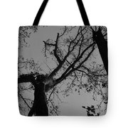 Silhouette Trees Tote Bag