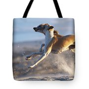 Whippet Dogs Fighting Tote Bag