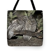 Whiskered Screech Owls Tote Bag