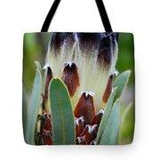 White And Brown Protea  Tote Bag