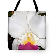 White And Purple Cattleya Orchid Tote Bag