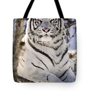White Bengal Tiger, Forestry Farm Tote Bag