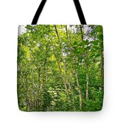 White Birch Along Rivier Du Nord Trail In The Laurentians-qc Tote Bag