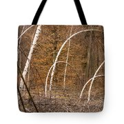 White Birch Trees In The Brown And Orange Forest Tote Bag