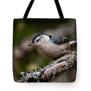 White-breasted Nuthatch Pictures 47 Tote Bag