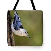 White-breasted Nuthatch Pictures 52 Tote Bag