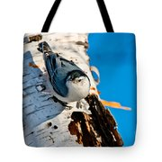 White-breasted Nuthatch Pictures 95 Tote Bag