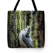White Breasted Nuthatchs Tote Bag