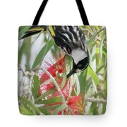 White-cheeked Honeyeater Feeding Tote Bag