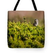 White-crowned Sparrow In A Bush Tote Bag