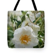 White Dog Rose And Buds Tote Bag