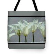 White Early Dawn Tulips Black Border Tote Bag