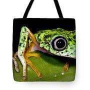 White-eyed Leaf Frog Tote Bag