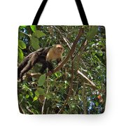 White-faced Capuchin Monkey In Manuel Antonio National Preserve-costa Rica Tote Bag