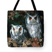 White Faced Scops Owl Tote Bag