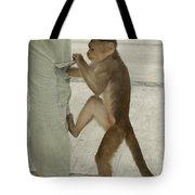 White-fronted Capuchin Checking Pocket Tote Bag