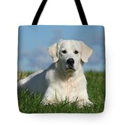 White Golden Retriever Dog Lying In Grass Tote Bag by Dog Photos