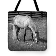 White Horse In A Pasture Among Daisy Flowers Tote Bag