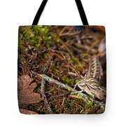White-lined Sphinx Moth Tote Bag