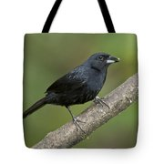 White-lined Tanager Tote Bag