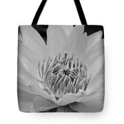 White Lotus 2 Bw Tote Bag