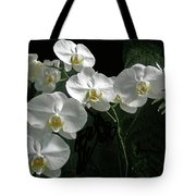 White Moth Orchid Phalaenopsis And Ferns Tote Bag