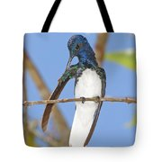 White-necked Jacobin Tote Bag