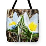 White Pasque Flower Tote Bag