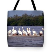 White Pelicans And Little Friends Tote Bag