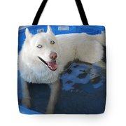 White Siberian Husky In Pool Tote Bag