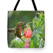 White-sided Flowerpiercer Tote Bag