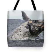 White Southern Right Whale Breaching Tote Bag