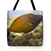 White Spotted Filefish Tote Bag