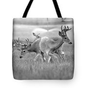 White Tail Shower Tote Bag