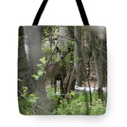 White Tailed Deer Encounter  Tote Bag