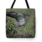White-tailed Hawks At Nest Tote Bag