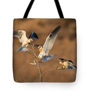 White-tailed Kite Trio Tote Bag