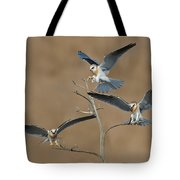 White-tailed Kite Young Tote Bag
