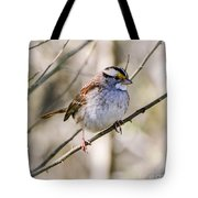 White Throated Sparrow Tote Bag