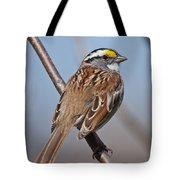 White-throated Sparrow Pictures 108 Tote Bag