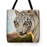 White Tiger At Sunrise Tote Bag