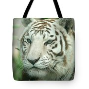 White Tiger Tote Bag by Karen Lindquist